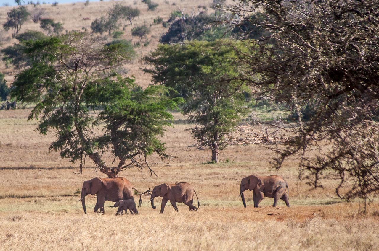Safari-in-Kenya-14