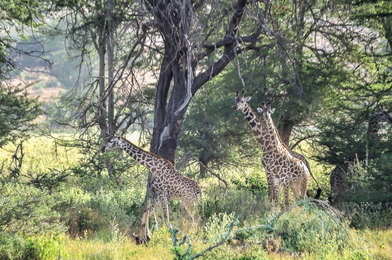 Safari-in-Kenya-24