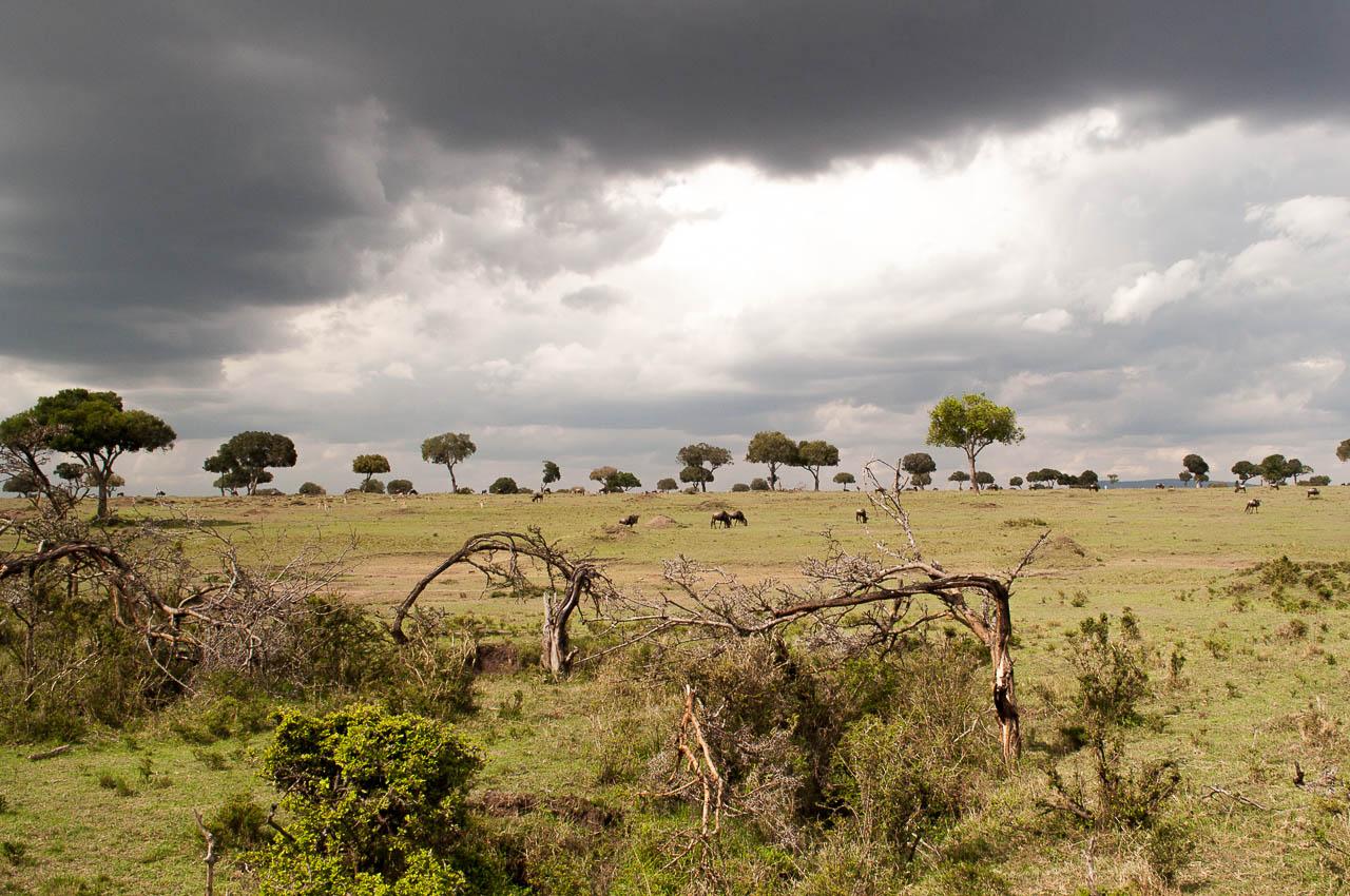 Safari-in-Kenya-36