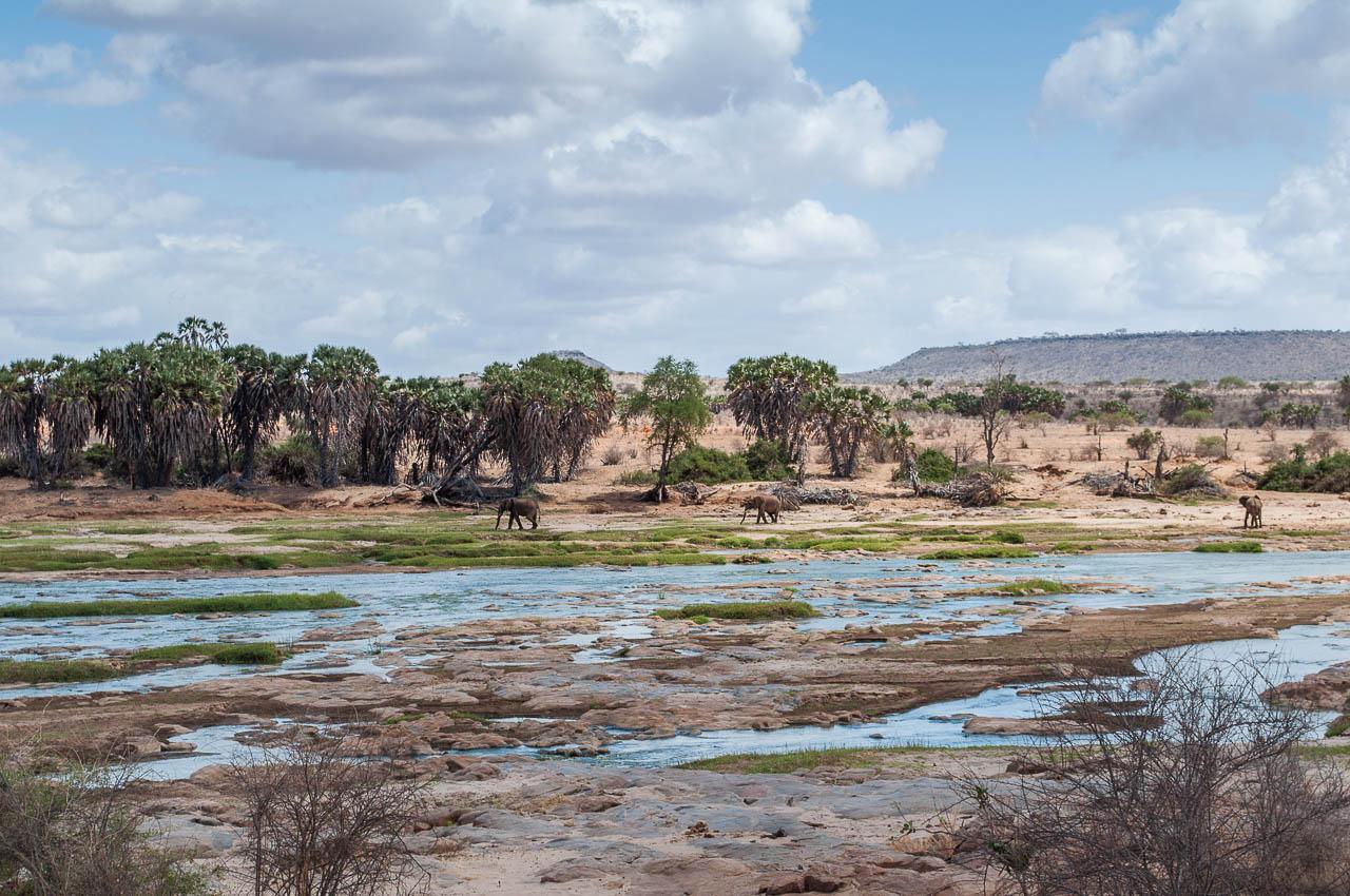 Safari-in-Kenya-44