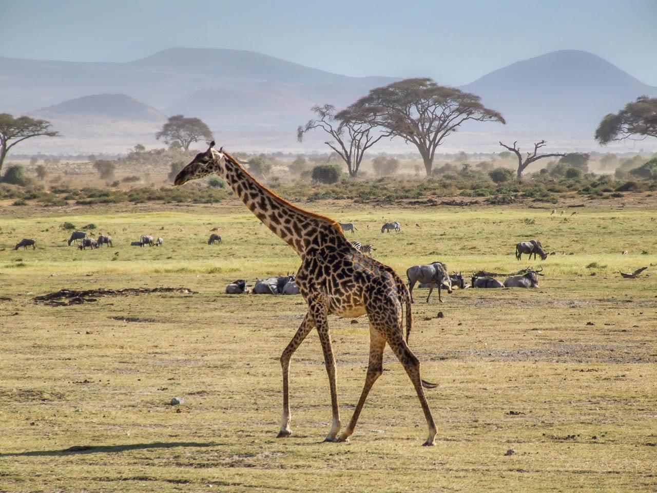 Safari-in-Kenya-60