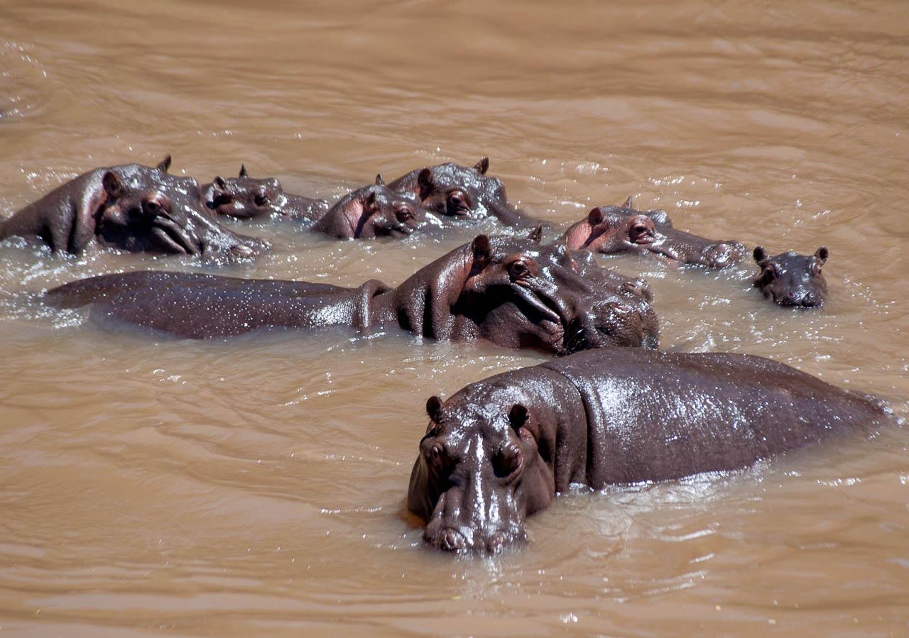 Safari-in-Kenya